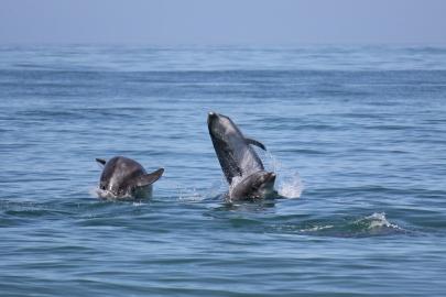 ~dolphin_2095-cr-1