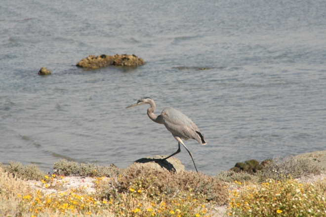 A heron rests on protected shoreline.