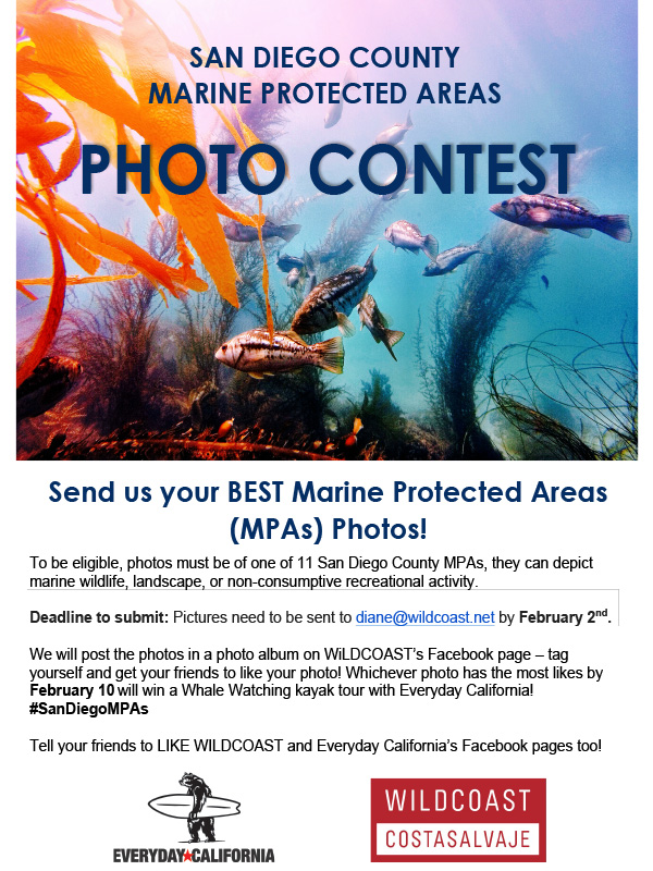 Microsoft Word - Photo contest 2015.docx