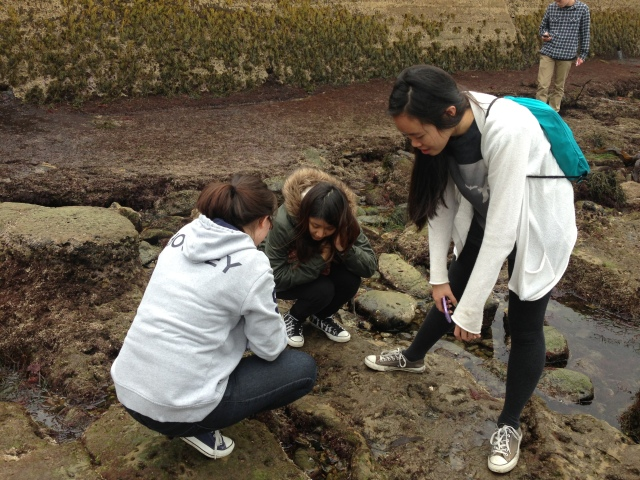 tidepooling with la jolla high students (1)