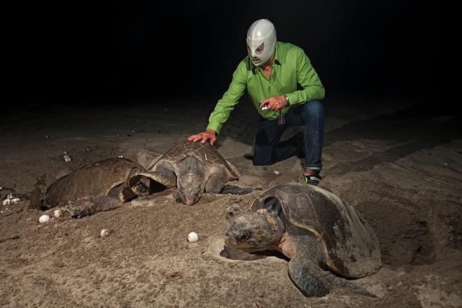 mg_9379el-hijo-del-santo-con-tortugas-golfina.jpg